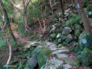 穿越大東山原始森林的古道